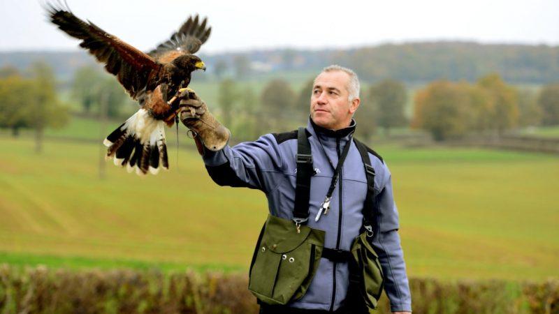 Fauconnier : un métier en voie de disparition