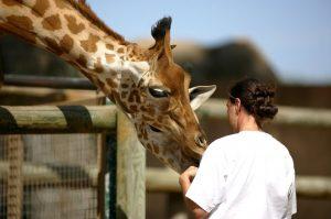 Femme avec une girafe